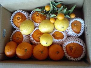 デコポン&はるみ、オレンジBOX